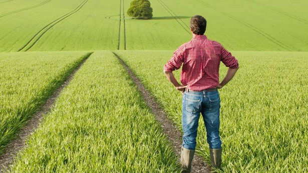 farmer-in-field-photo-juice-rex-shutterstock-615x346